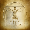 Anatomy of Vitruvian Man